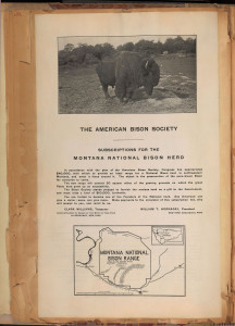 Scanned page from Founding of two national bison herds. William T. Hornaday scrapbook collection on the history of wild life protection and extermination. Volume 2. WCS Archives Collection 1007.