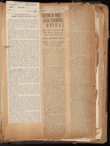 Articles announcing passage of the Bayne-Blauvelt Bill. In Hornaday Wildlife Scrapbook Collection, Vol. 3. WCS Archives Collection 1007.