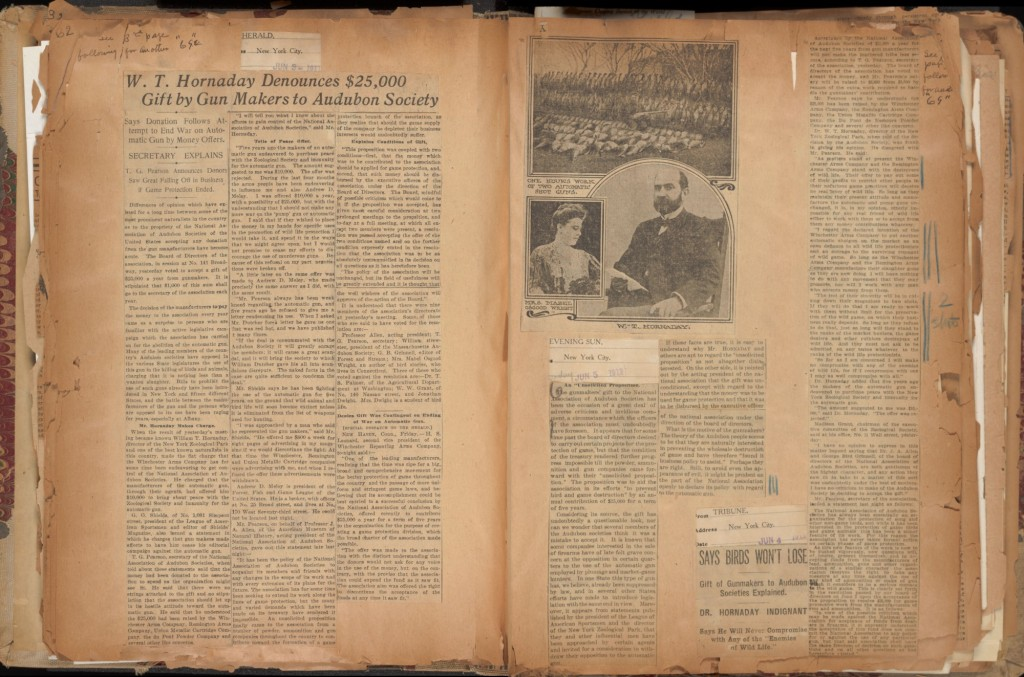 Various 1911 articles reporting on Hornaday's denunciation of a $25,000 gift by gun manufacturers to the Audubon Society. After much public uproar, led by Hornaday, the Audubon Society returned the gift. In Hornaday Wildlife Scrapbook Collection, Vol. 3. WCS Archives Collection 1007.