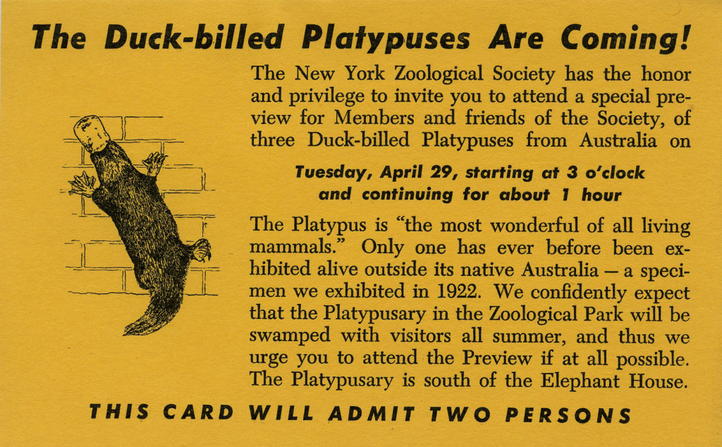 Invitation to the opening of the platypusary, April 1947. Wildlife Conservation Society Publications and Printed Ephemera collection. Collection 2016.