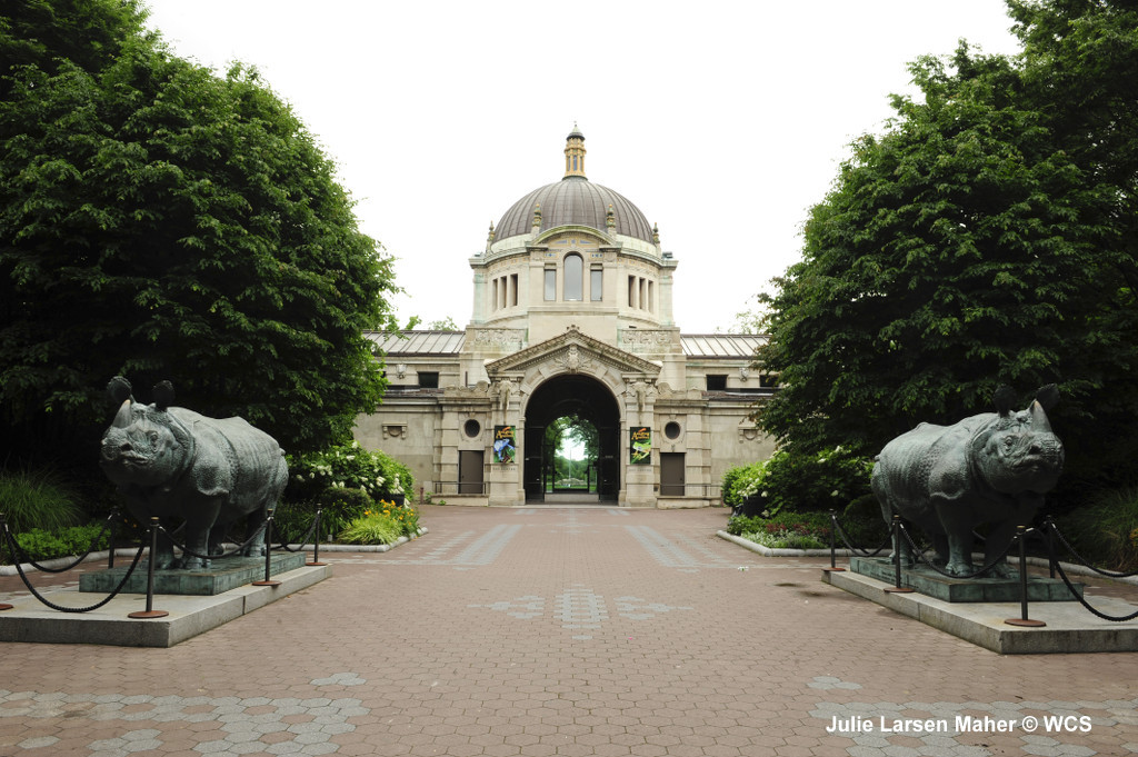 Katharine Lane Weems's rhino statues flank the Bronx Zoo's Zoo Center. Photo: Julie Larsen Maher © WCS