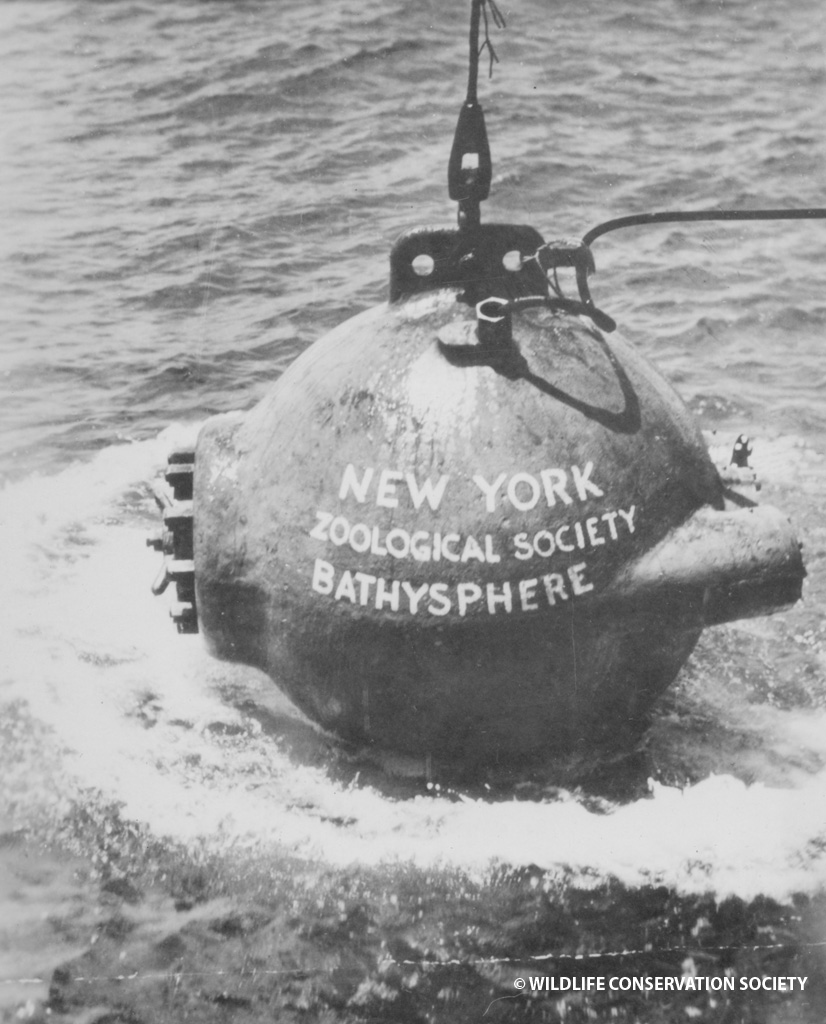 Bathysphere being lowered into the ocean, 1932. WCS Photo Collection