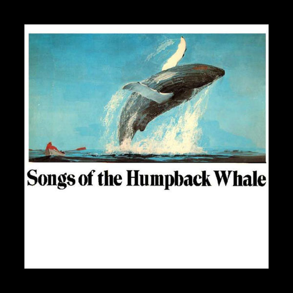 Songs of the Humpback Whale album cover, 1970, CRM Records.