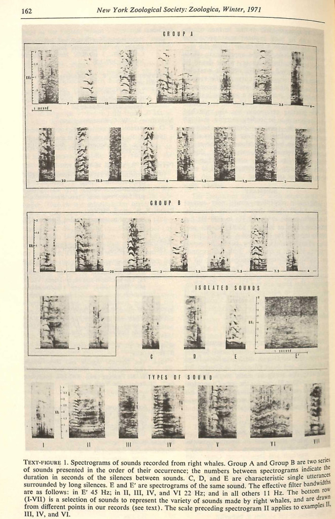 Spectograms of sounds recorded from right whales. From Roger Payne and Katherine Payne, Underwater sounds of southern right whales. Zoologica 56.7 (1971): 162.