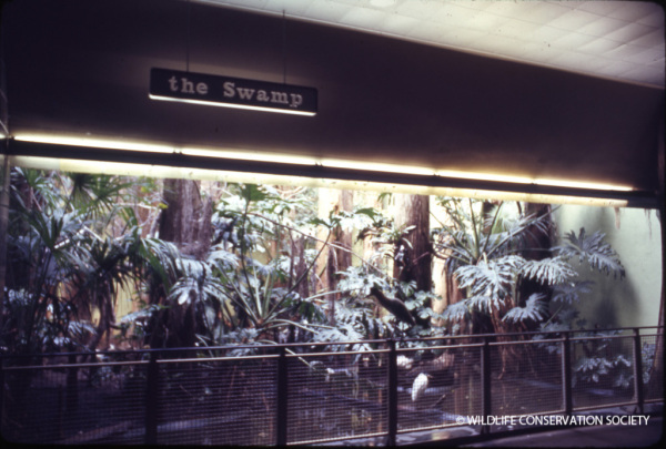 """The Swamp"" display as it appeared in 1971. WCS Photo Collection"
