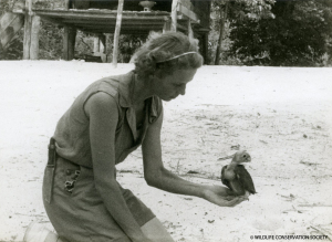 Gloria Hollister with Blue-Headed Parrot, circa 1936. Gloria Hollister Anable papers, 1914-2005 (bulk 1926-1947). Collection 1006. Wildlife Conservation Society Archives, New York.