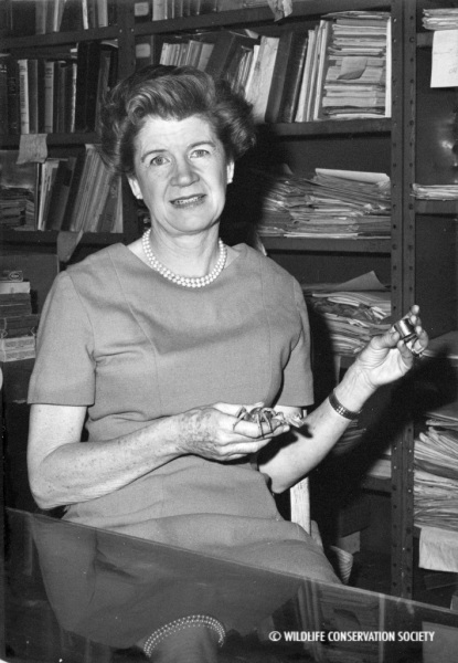 Jocelyn Crane with crab in her office at the Bronx Zoo, January 1966. WCS Photo