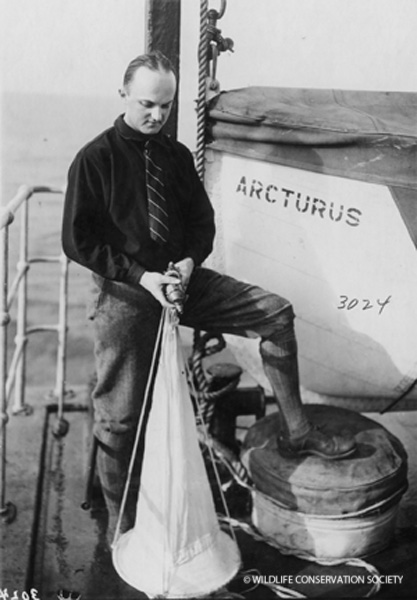 Charles Fish handling equipment on the ship, 1925. WCS Photo Collection.