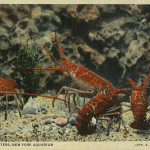 New York Aquarium postcard