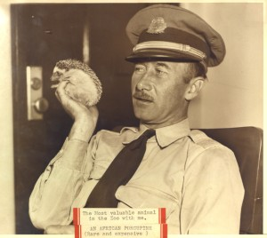 Captain Cheyne-Stout with his favorite zoo animal, Spiny, whom he kept as a pet in his office