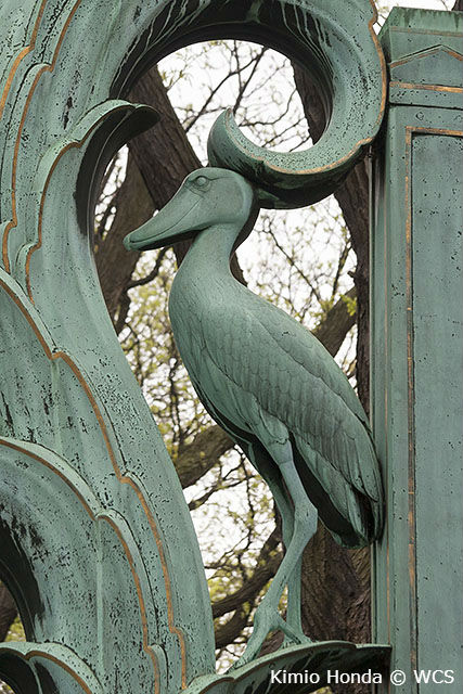 Jimmy the shoebill is memorialized in the Rainey Gates. Kimio Honda © WCS