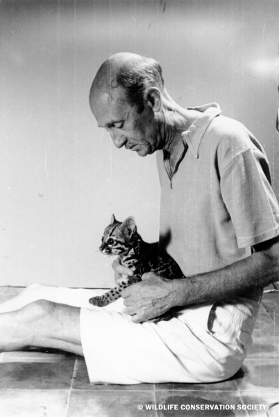Just an average day for William Beebe, hanging out with an ocelot kitten in Venezuela, circa 1945.