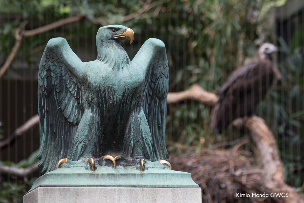 Paul Jennewein eagle sculpture in front of Bronx Zoo's Birds of Prey exhibit.