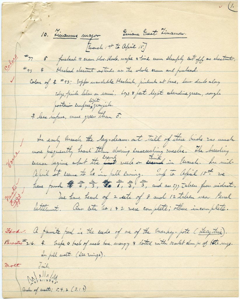 First page of Beebe's notes on his six-weeks' observation of Tinamus major, likely 1916. WCS Archives Collection 1005B