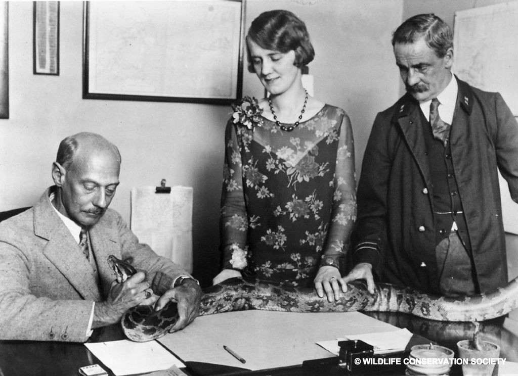 Grace Davall with Reptiles Curator Raymond Ditmars (left) and Keeper Toomey (right), 1920. WCS Photo Collection