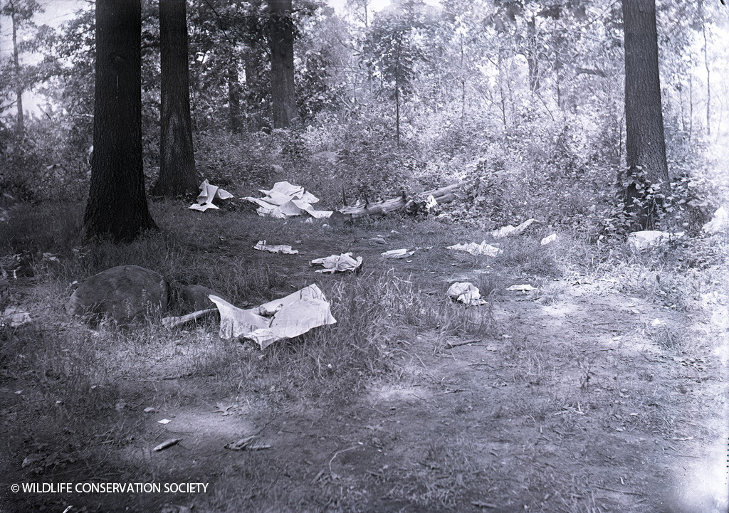Litter in the Bronx Zoo in 1908