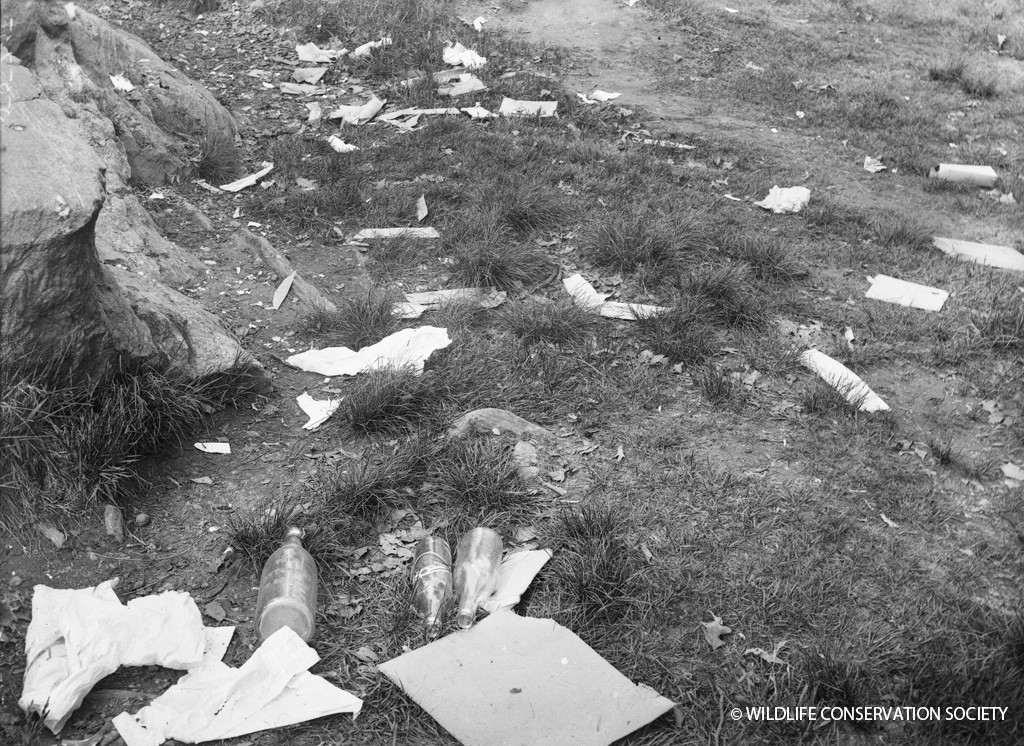 Litter in the Bronx Zoo four years into the Rubbish War, in 1912