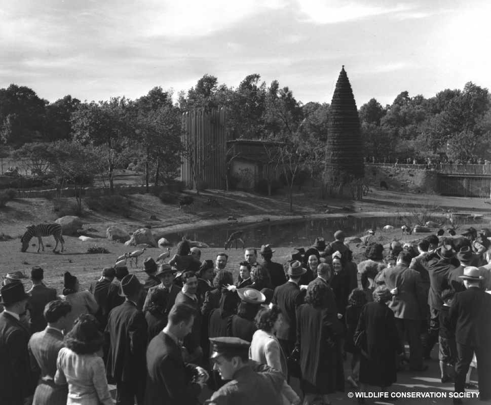 Crowds gathered during the opening month of the African Plains, May 1941. WCS Photo Collection