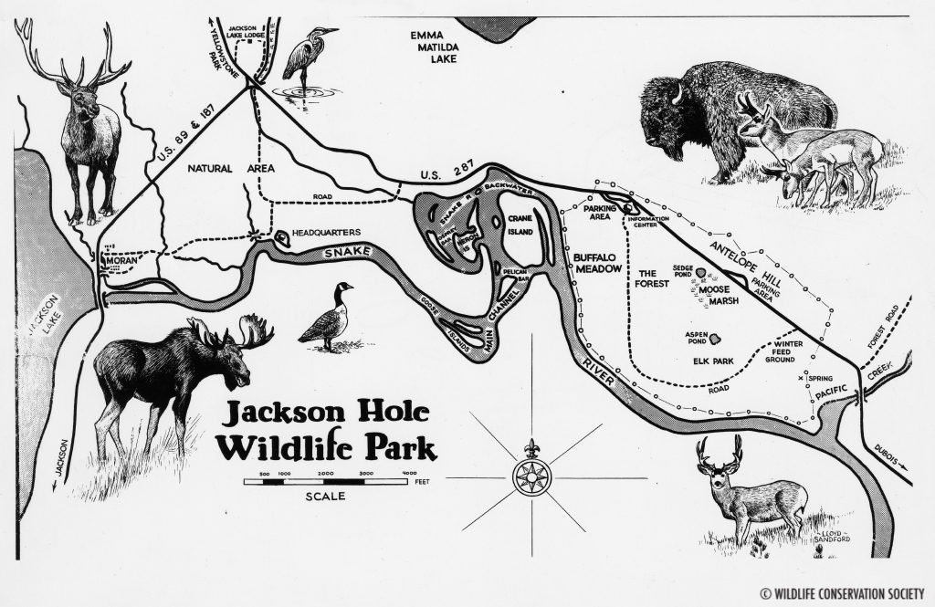 Jackson Hole Wildlife Park map drawn by Lloyd Sanford, 1948. WCS Photo Collection