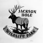 Wildlife Conservation Society_24782_Jackson Hole Wildlife Park Drawing by Lloyd Sanford_01 02 53