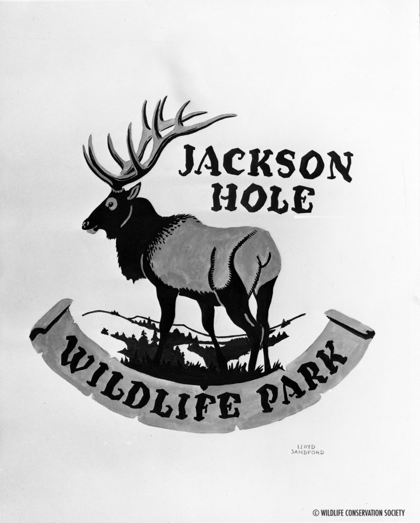 Jackson Hole Wildlife Park drawing by Lloyd Sanford, 1953. WCS Photo Collection