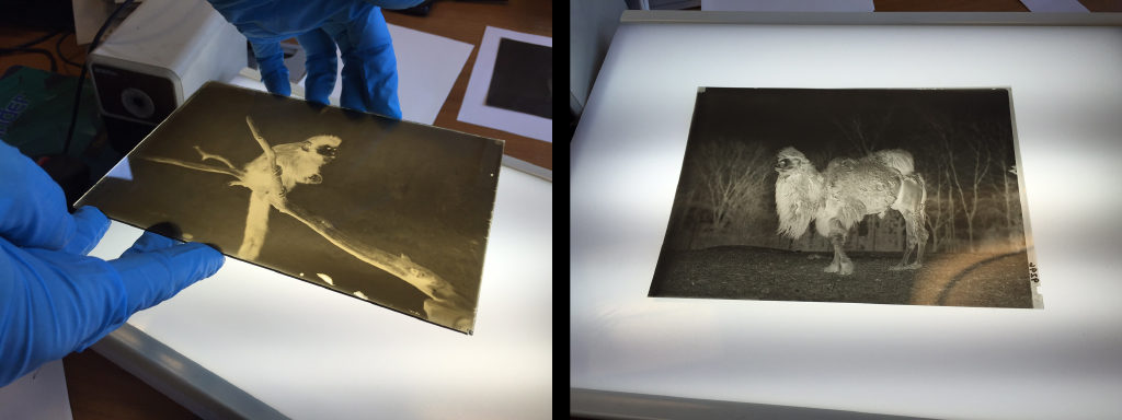 An early glass negative on the left and a film negative on the right