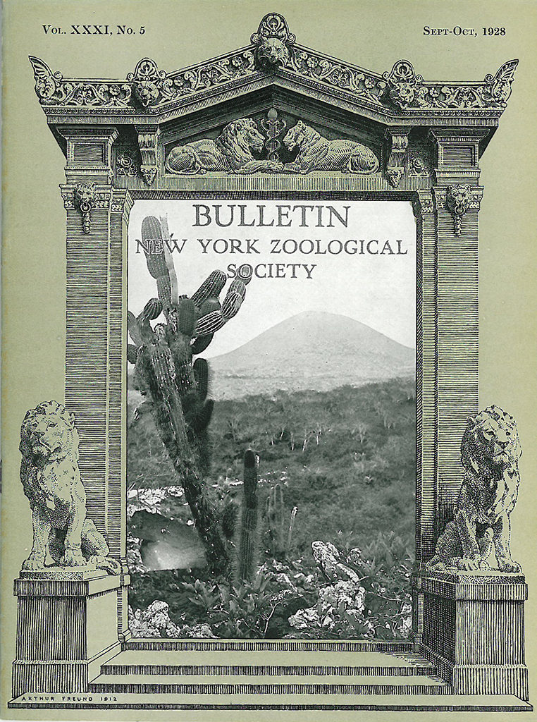 September/October 1928 cover of the Bulletin of the New York Zoological Society, featuring one of Sanborn's images from the Galapagos expedition