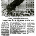 "Excerpt from Mark Finston's article, ""Towers Over Rockefeller Plaza: Huge tree finds its places in the sun"" published in the Newark Star-Ledger on December 2, 1969. Text reads: ""When last year's Christmas tree was hoisted, a small owl, which had apparently been living in the tree, and which had not emerged during the long ride from Canada, let out a screech. The owl was donated to the Bronx Zoo. No such animal life was discovered in this year's tree...""  From a clippings file titled ""Birds, 1969"". Scanned from WCS Archives Collection 2032."